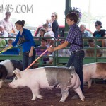 market pigs